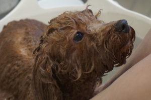 るるちゃん温浴中
