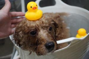 ティティちゃん温浴中