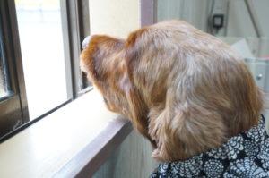 エルちゃん窓の外を眺める