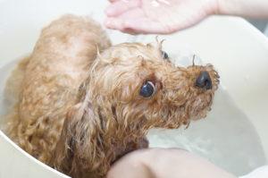 チーク炭酸泉浴