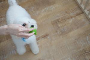 ひなたちゃんおもちゃで遊ぶ
