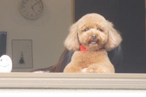 ルルちゃん窓から