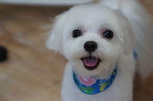 バニラ笑顔